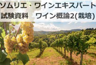 【2020年】ワイン概論2(ブドウ栽培)|ソムリエ・ワインエキスパート試験